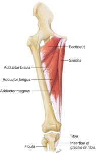 Adductor Strains in Soccer